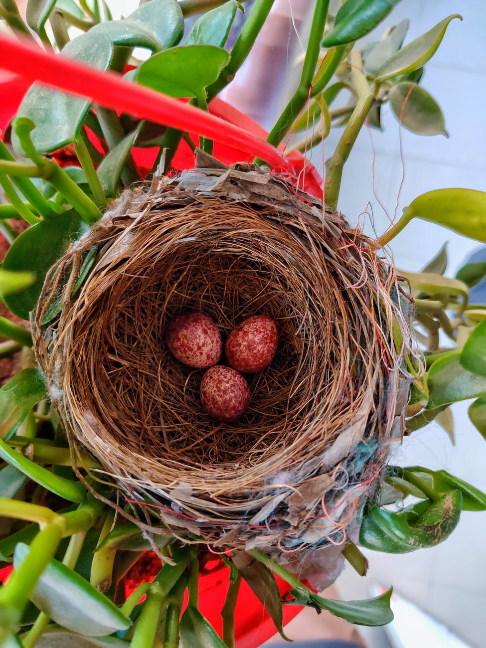 brown bird nest on green plant